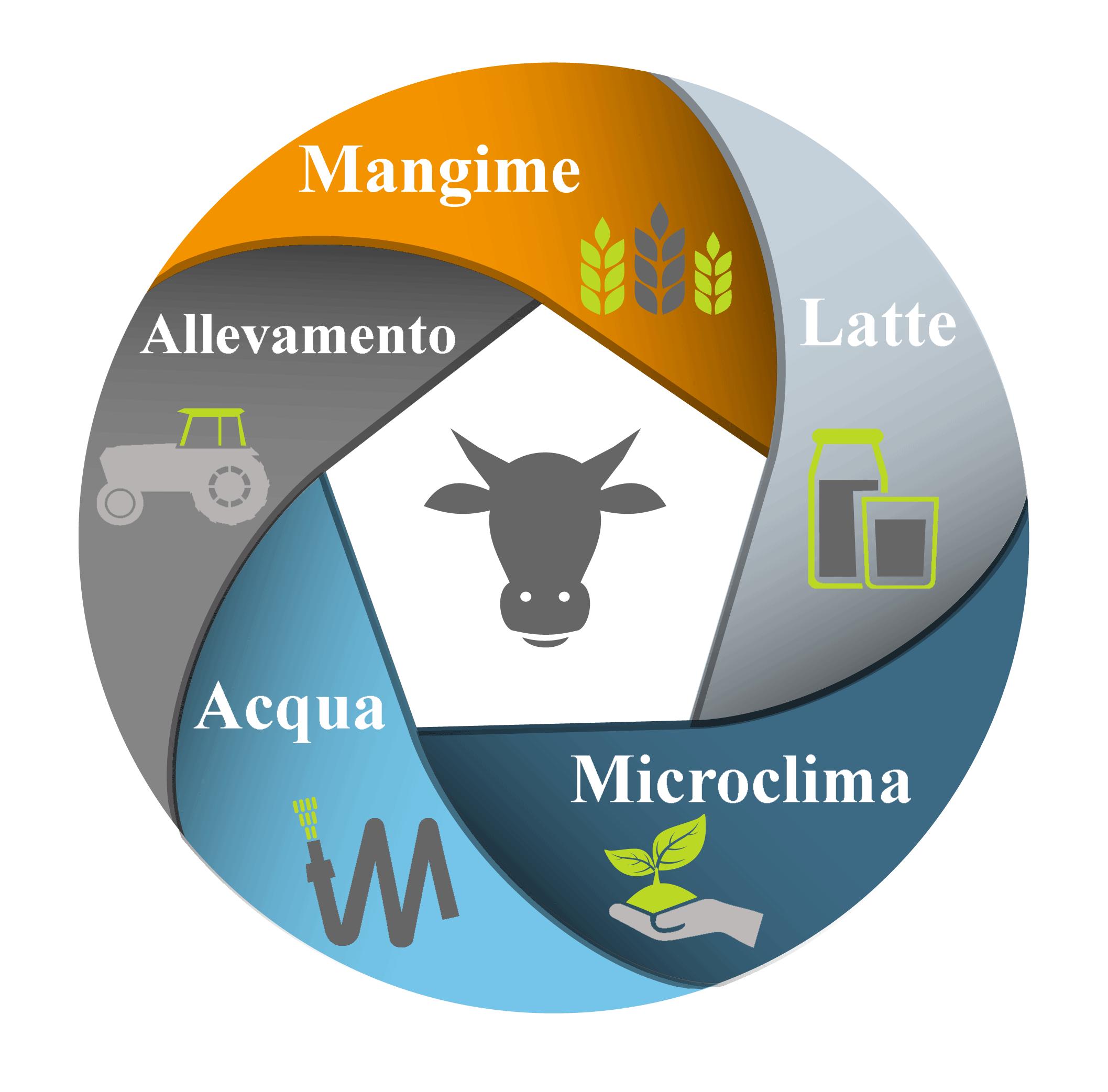 Il Vitello a carne bianca | Il Sistema di Lavoro